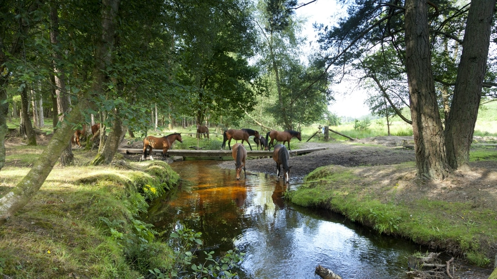 The New Forest day trip from London